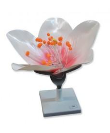 Flor de préssec